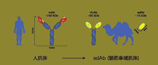 NanoMab technology